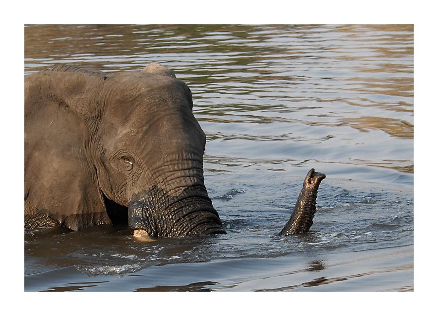 Schnorchel Einsatz im Chobe
