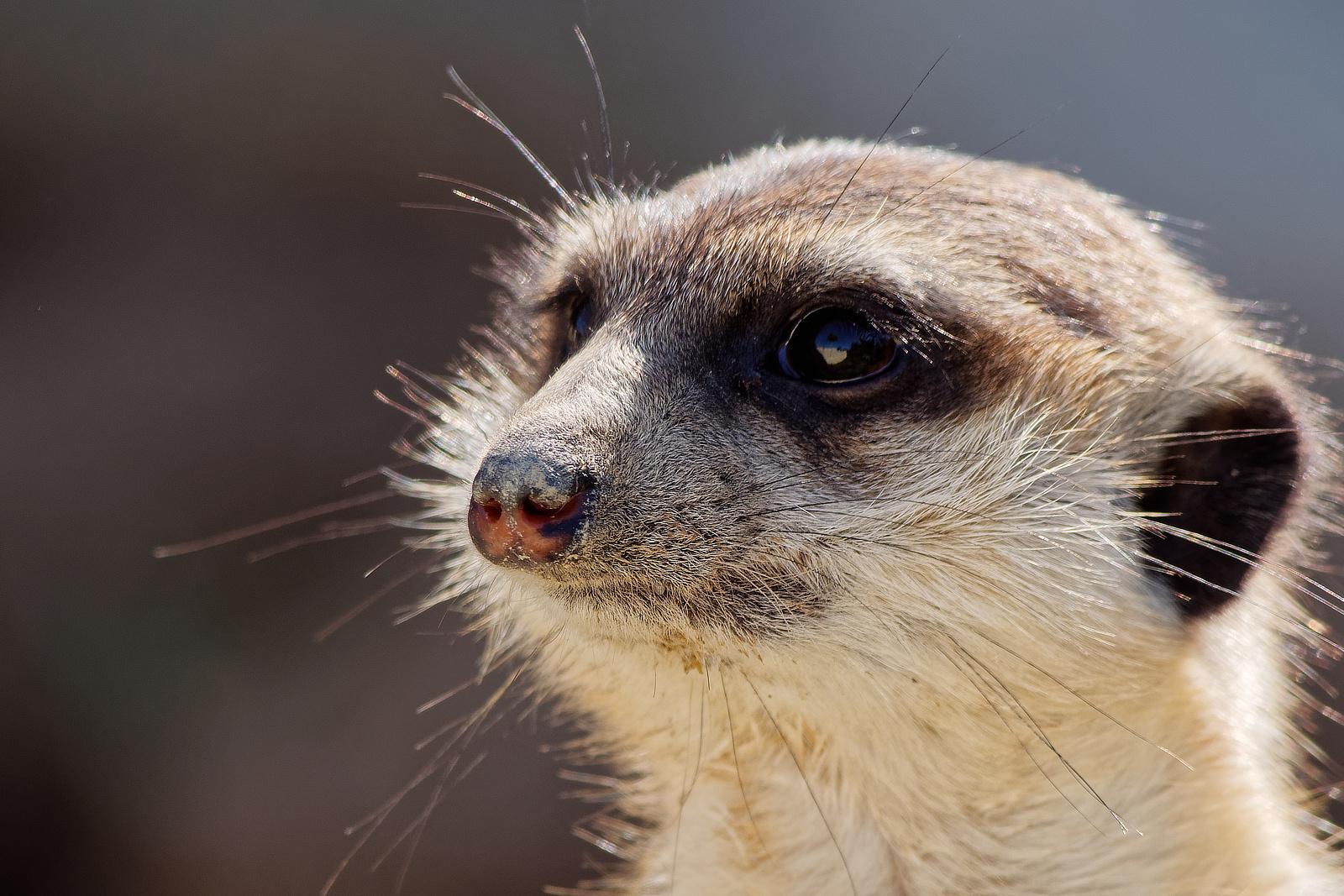Schnuckelchen Foto & Bild   natur, zoo, tiere Bilder auf