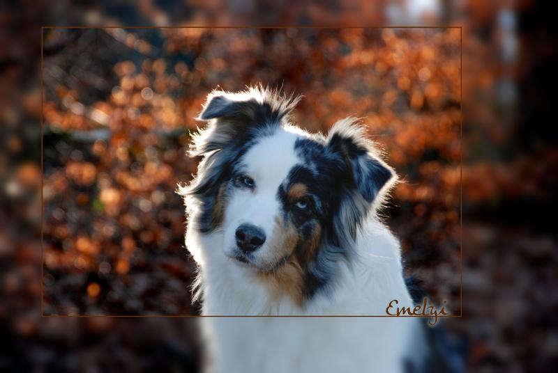 Schnuffelhund
