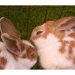 Schnuppi und Mimi...