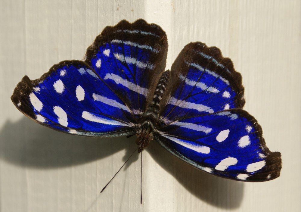 schön Blau