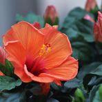 Schön die Farbe Orange.....