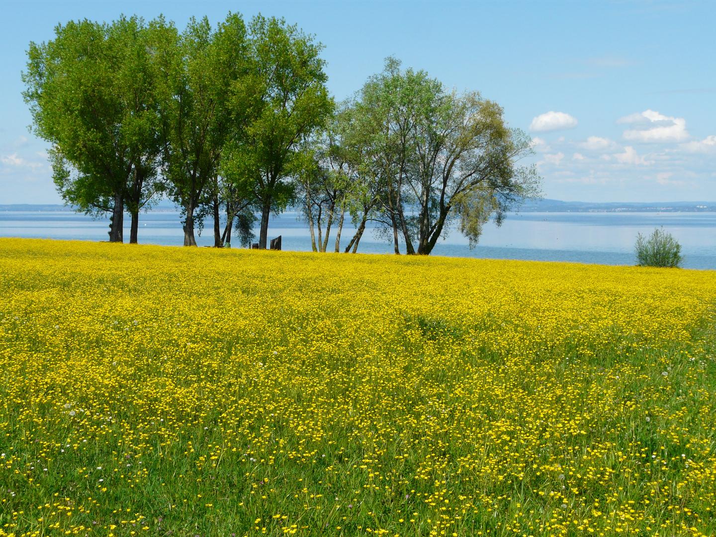 Schön Gelb in Arbon (CH)