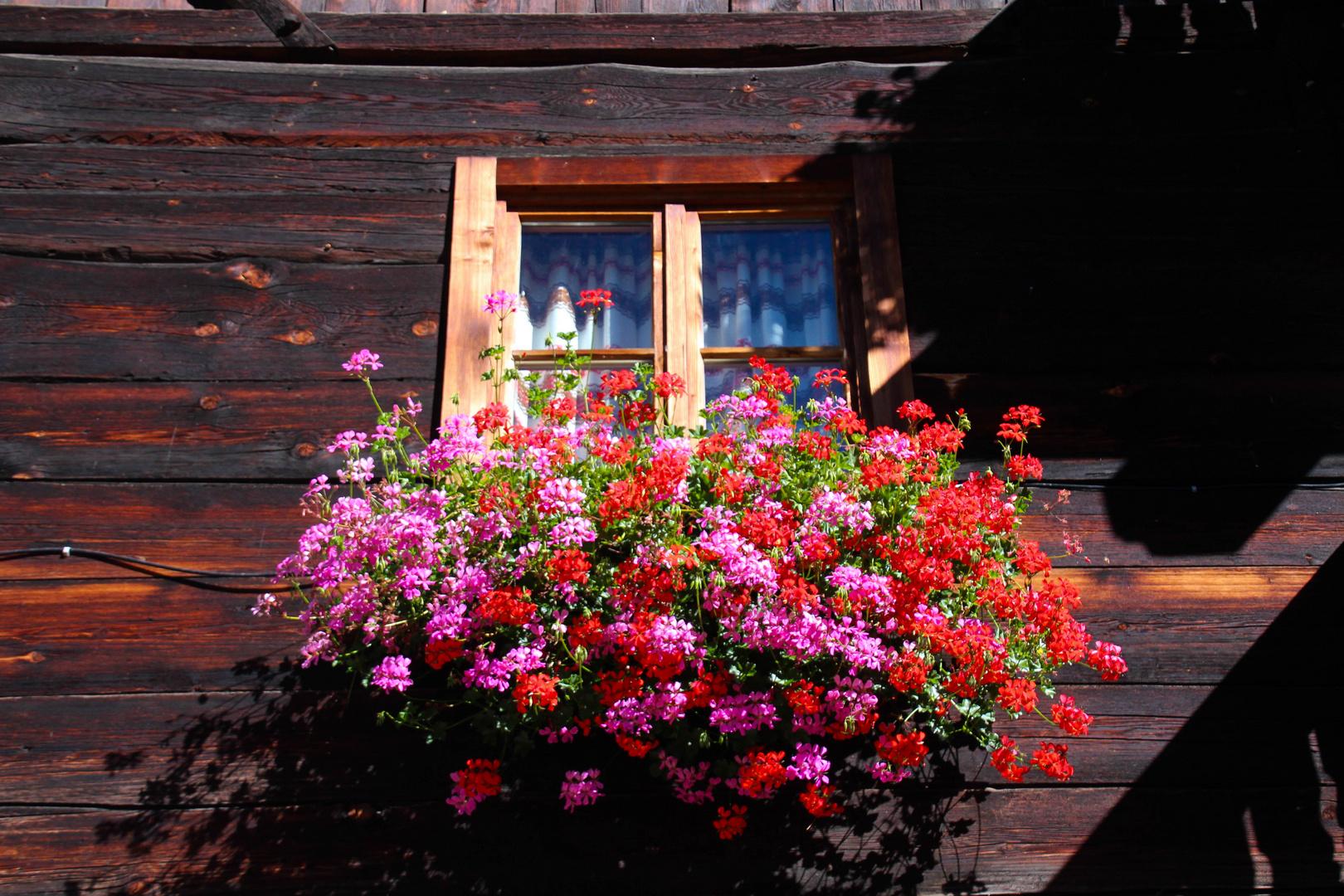 Schön gepflegt der Blumenkasten