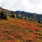 Schön ist die bunte Welt der Almwiesen...