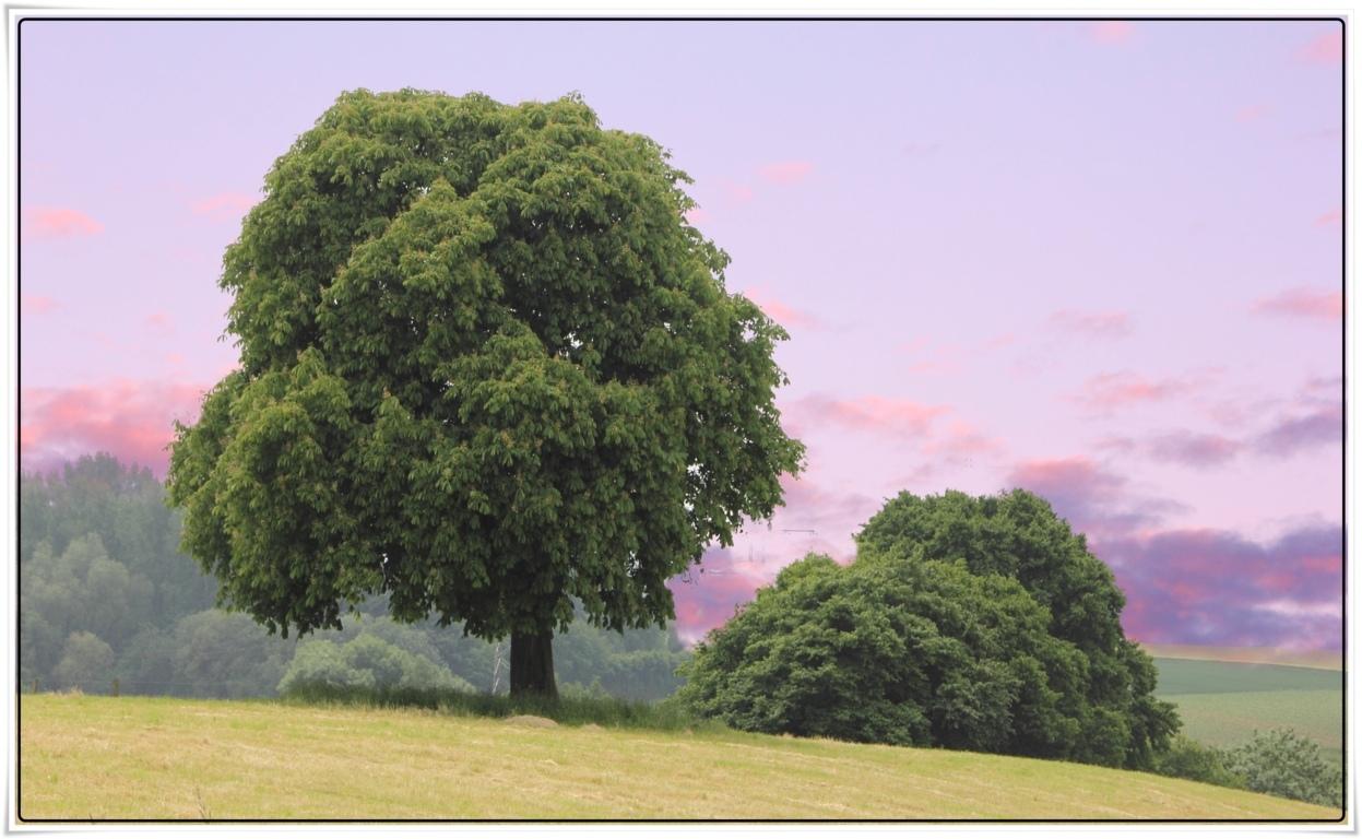 Schon Ist Sie Unsere Heimat Foto Bild Landschaft Kunst Im Bild Natur Bilder Auf Fotocommunity