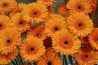 Schön orange