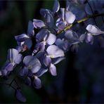 schön sind die Blüten....
