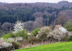 Schönbuch - Wald des Jahres 2014