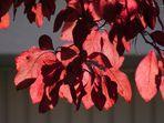 Schöne Blättern