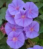 Schöne Blüten 1