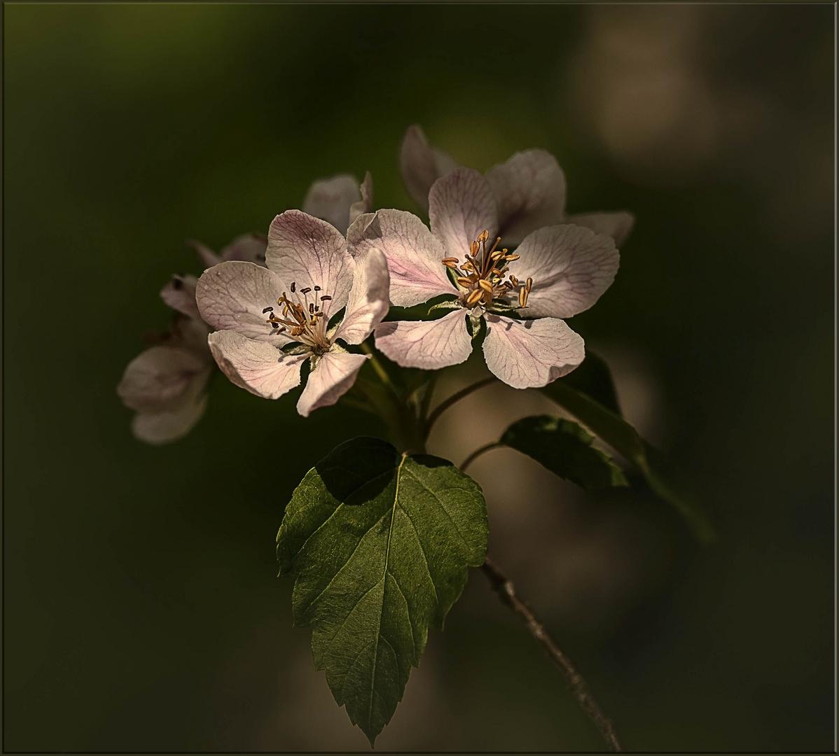 schöne Blüten