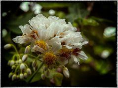 schöne Blüten im Botanischen Garten