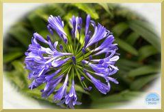 Schöne Blüten im Parque Terra Nostra