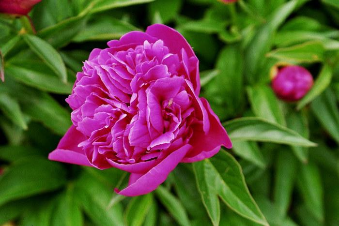 Schöne Blume?