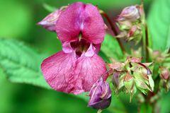 Schöne Blume im Wald