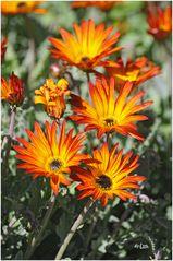 Schöne Blumen....