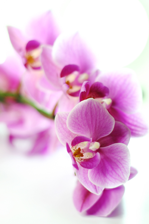 sch ne blumen foto bild pflanzen pilze flechten bl ten kleinpflanzen orchideen. Black Bedroom Furniture Sets. Home Design Ideas