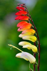 Schöne bunte Blüte