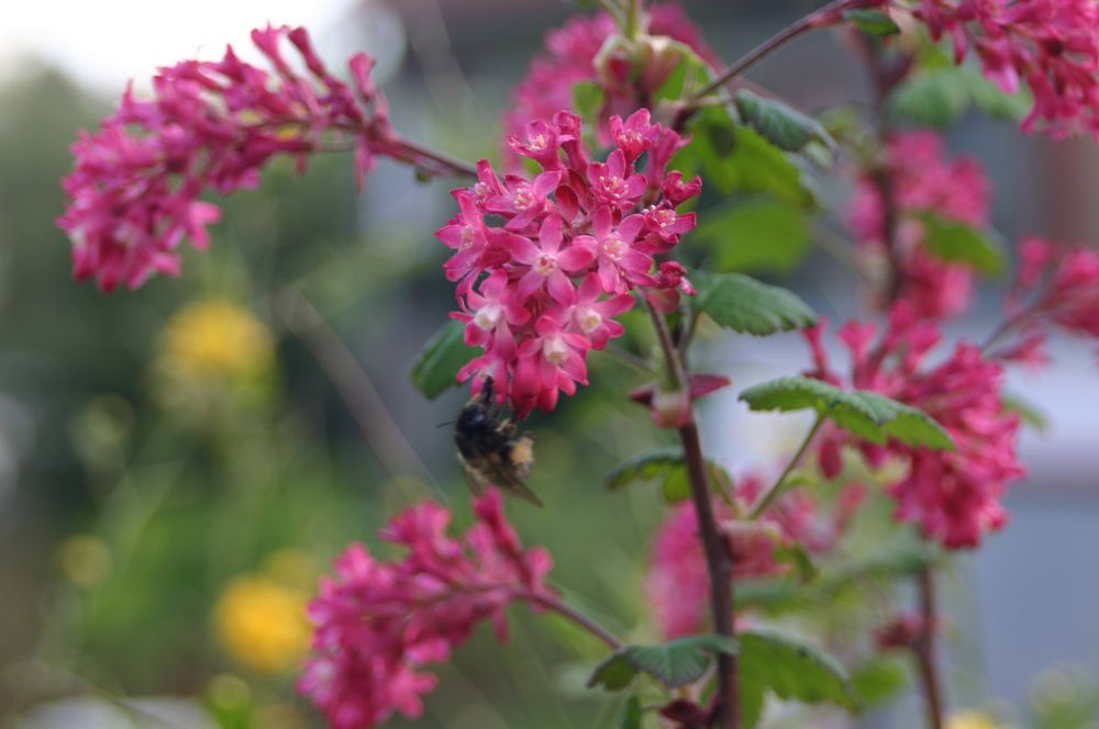 schöne fleißige Bienen