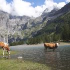 Schoene heile Bergwelt (Oeschenensee/Schweiz)