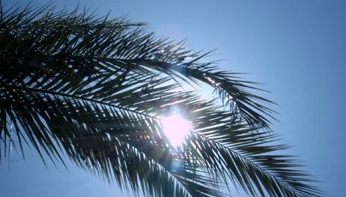 ...schöne heisse ägyptische Sonne...
