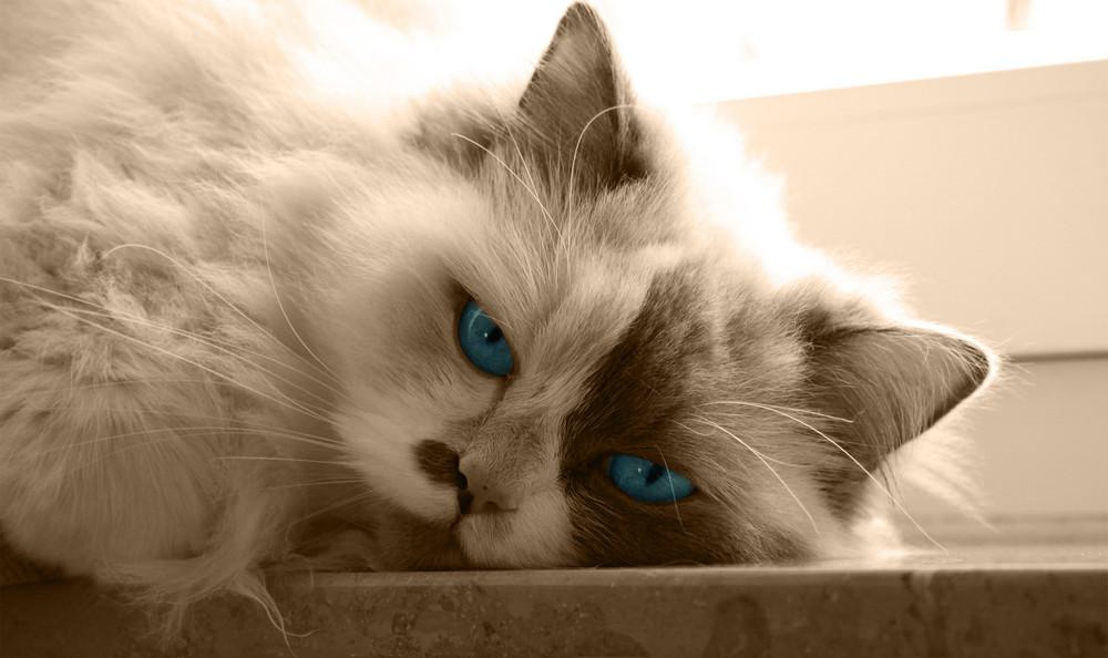 Schöne Katze Foto & Bild