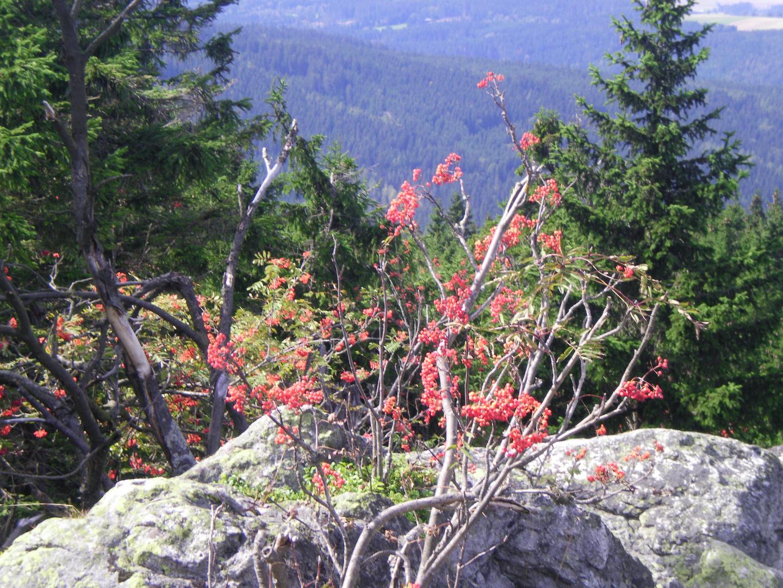Schöne pflanze auf dem Oksenkopf