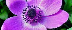 Schöne schwarze Pollen - von welcher Blühte bitte ?