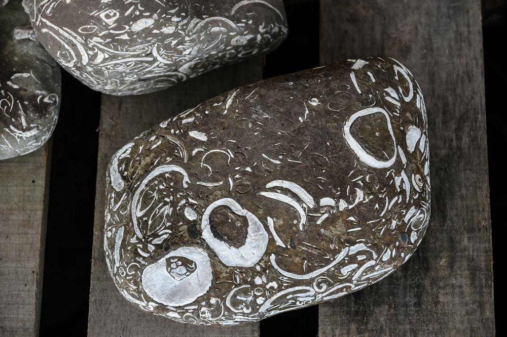 Schöne Steine, Parque Nacional Chiloe      DSC_5839-2
