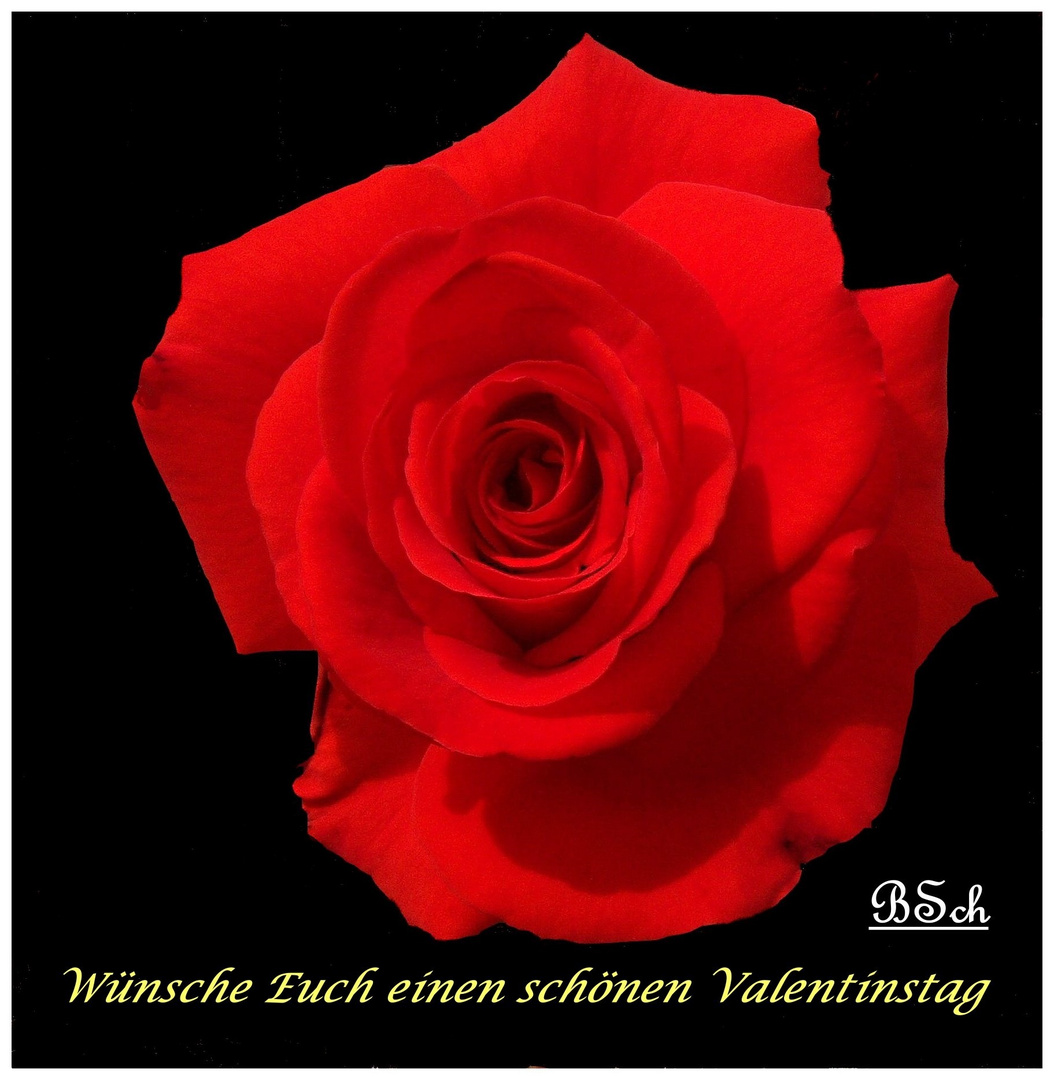 Schönen Valentinstag Foto Bild Pflanzen Pilze Flechten