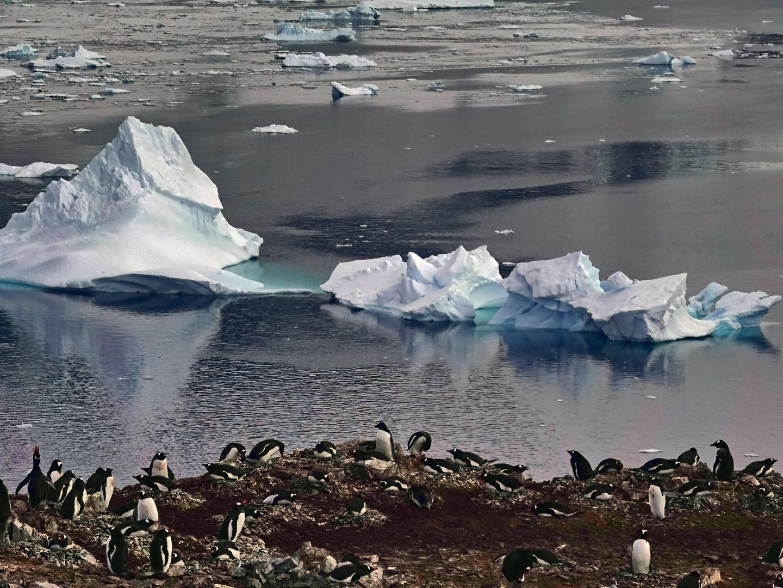 Schöner Ausblick auf Eisberge