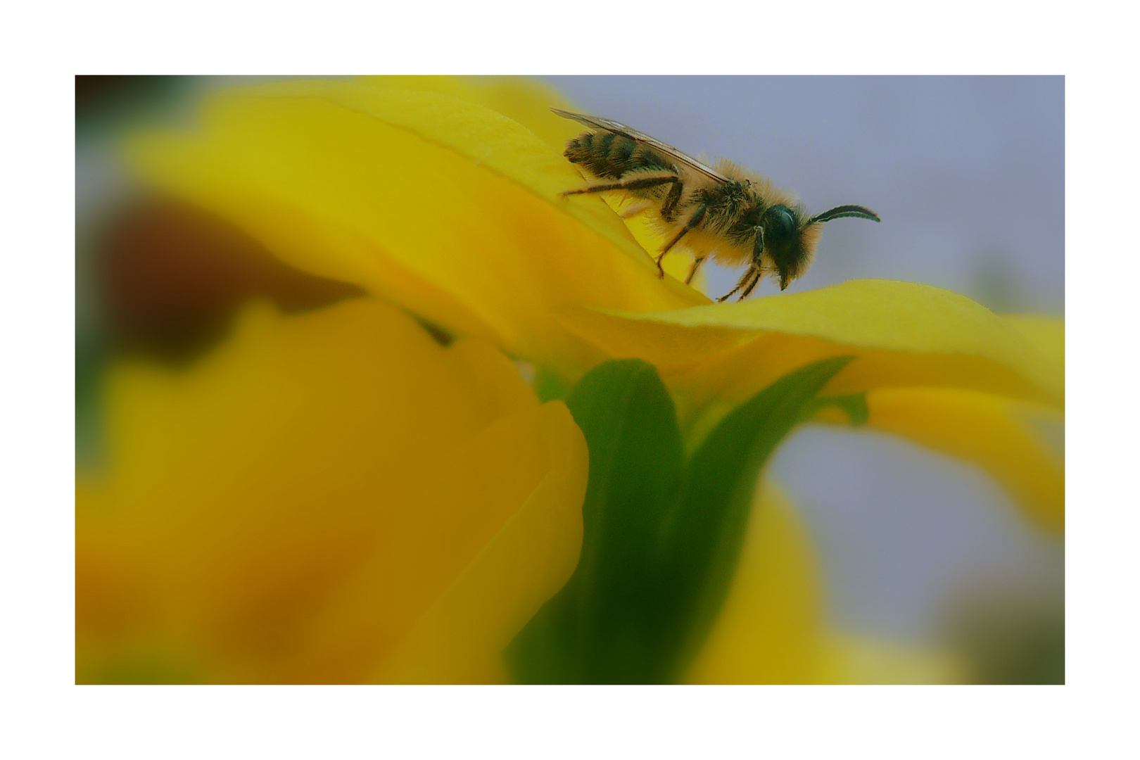 Schöner Besuch im Garten :-)