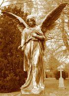 schöner Engel