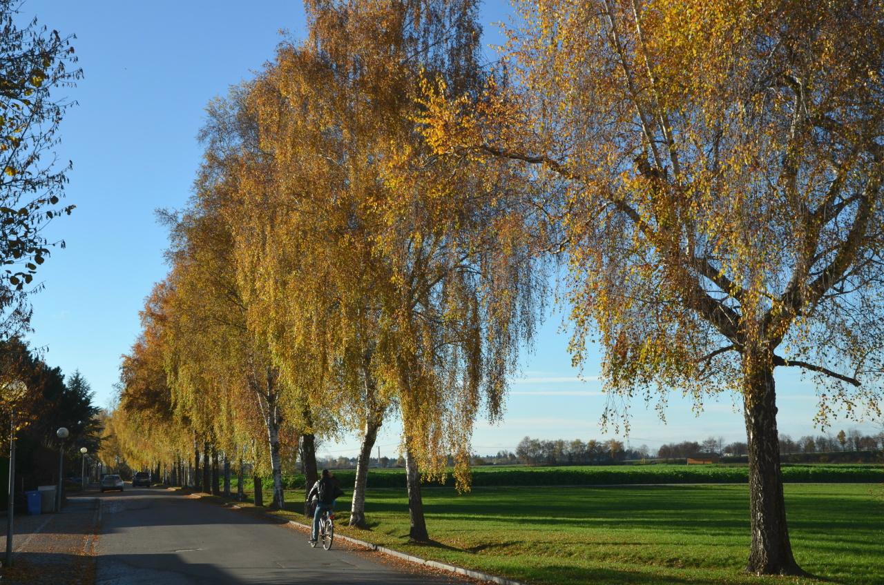 Schöner Herbst in einer der wenigen Alleen