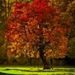 Schöner kann der Herbst kaum leuchten