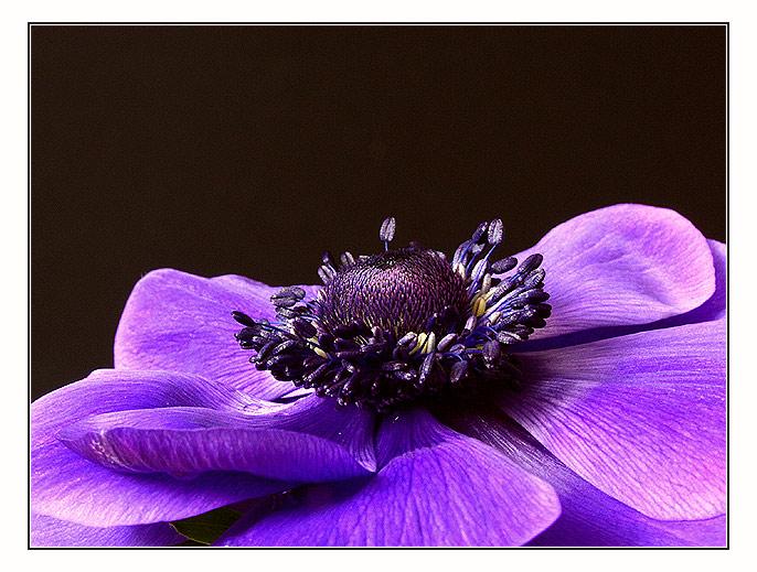 Schöner Rahmen........zur schönen Blume!