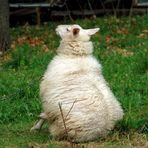 Schöner Rücken kann auch entzücken....