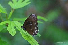 Schöner Schmetterling im Schmetterlingshaus Luisenpark Mannheim