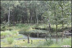 Schöner Spaziergang durchs Moor