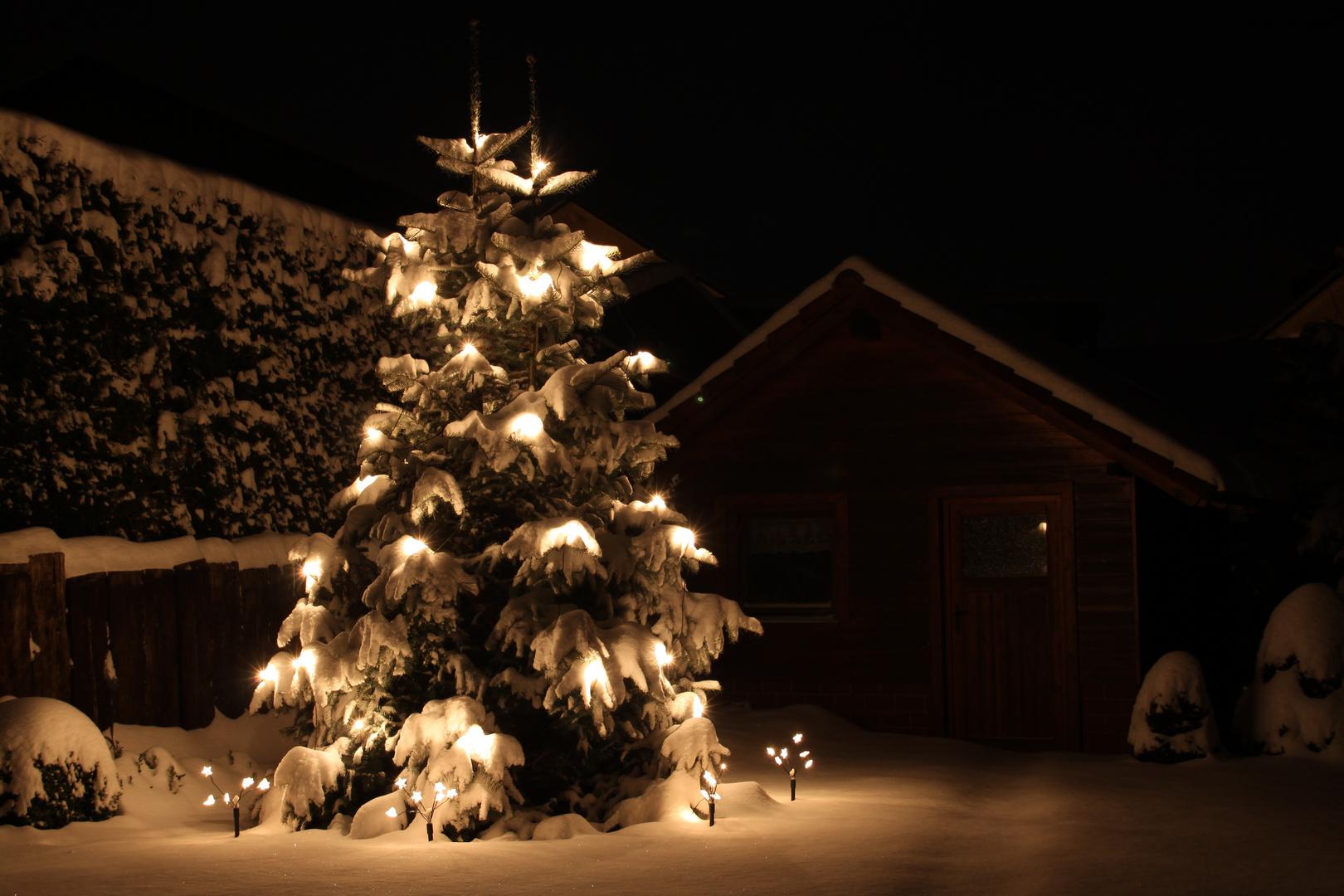 sch ner weihnachtsbaum foto bild jahreszeiten winter. Black Bedroom Furniture Sets. Home Design Ideas