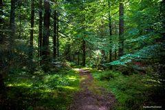 Schönes enges Blätterdach des Waldes