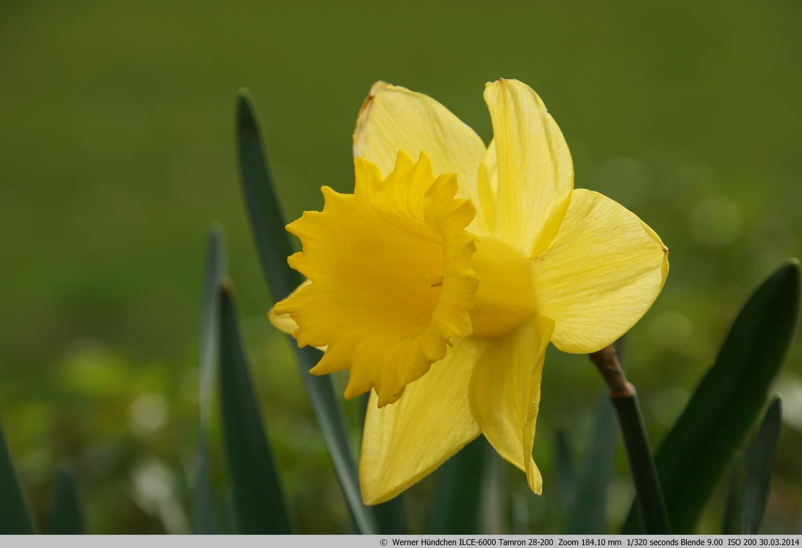 schönes Gelb