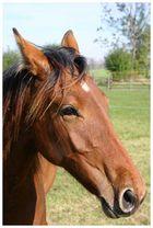 Schönes Pferd