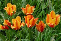 Schönheit des Frühlings