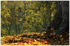 ... Schönheit des Herbstes ...