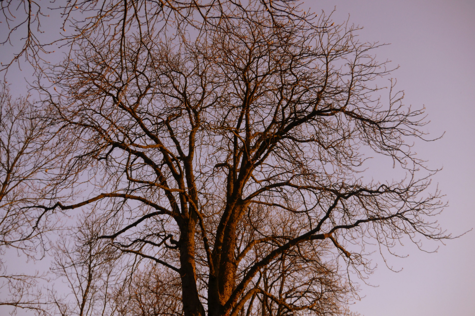 Schönheit eines Baumes.