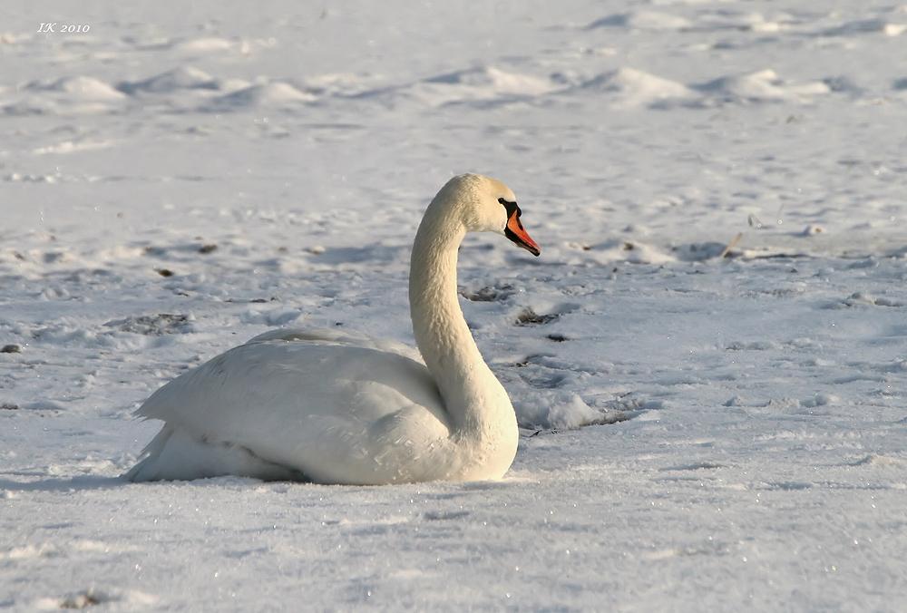 Schönheit im Schnee