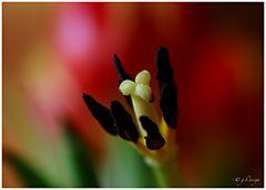 Schönheit liegt oft in kleinen Dingen...