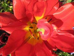 Schönheit mit roten Locken ...